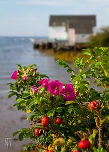 Bailey Island 2018