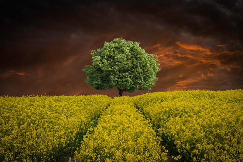 oak field 2.jpg
