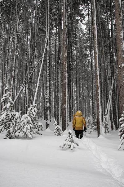 5074-Pole Trees-©Yvonne Carter.jpg