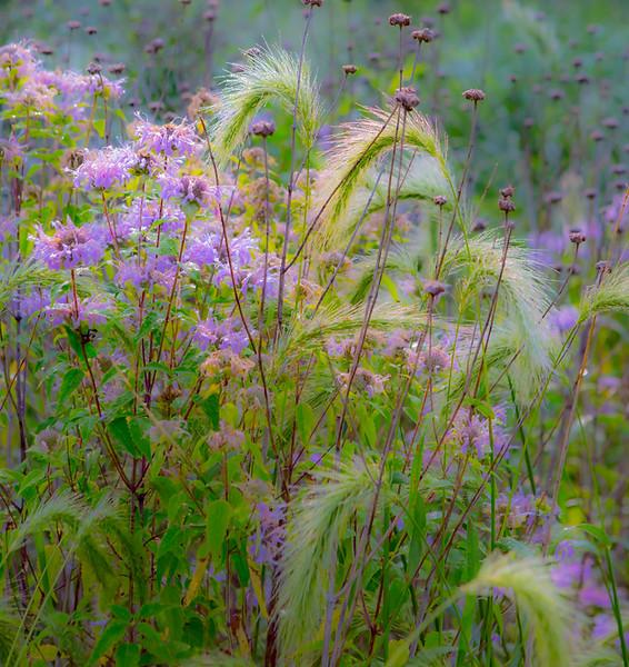 TALL GRASS-DEW-97.jpg