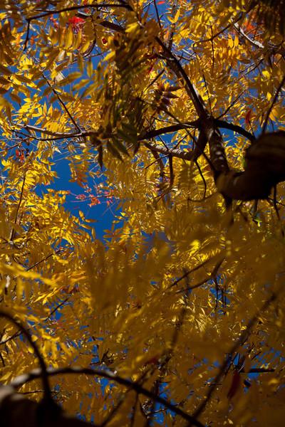 fall-3955.jpg