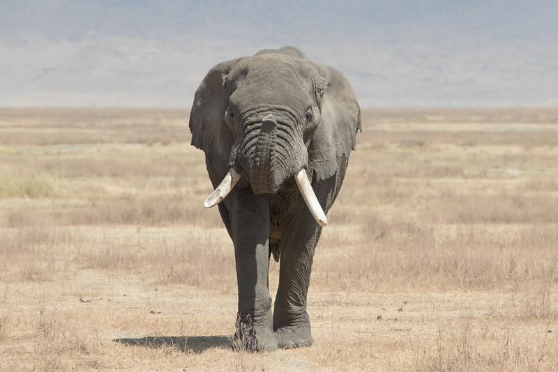 Africa - 101816 - 7138.jpg