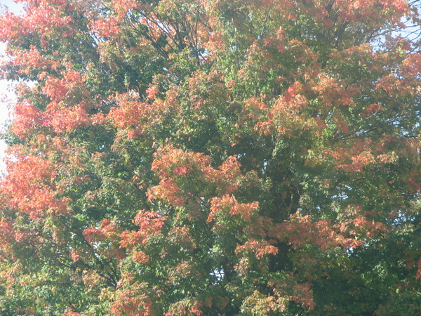 Fall pics 2008 049.jpg