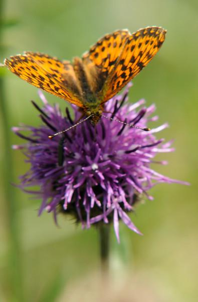 Lindeijer_2010-07-15_130409.jpg