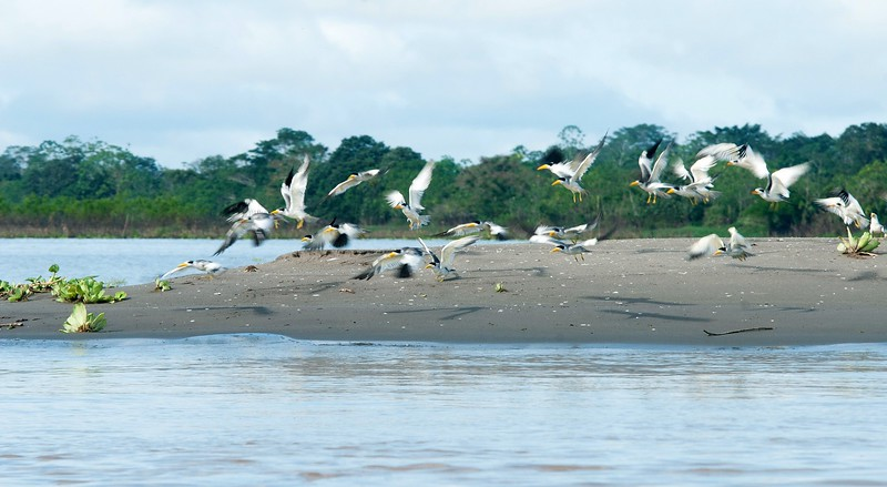 Iquitos_11.jpg