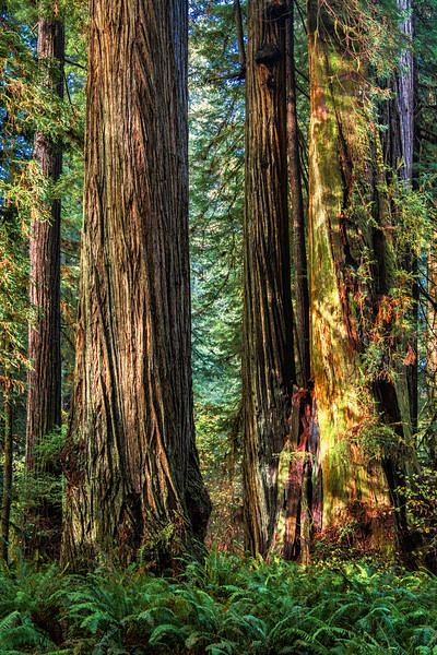 Oregon Coast & CA Redwoods 2016