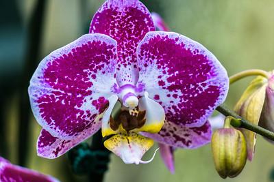 2014 Nicholas Conservatory Orchid Show