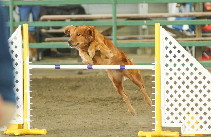 10-31-2015 Border Terrier-3049.jpg