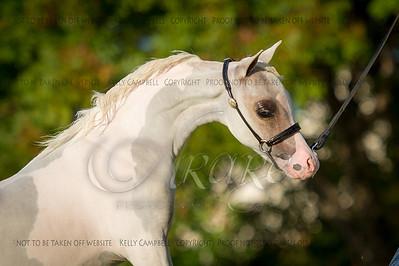 Jen P. 3 horses