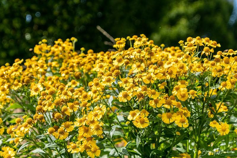 850_Sussex Prairie Gardens-8502647.jpg