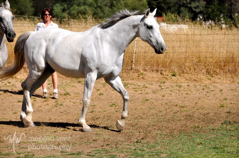 EB&Horses-108.jpg