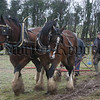two nice shire horses ploughing, 06W11N79