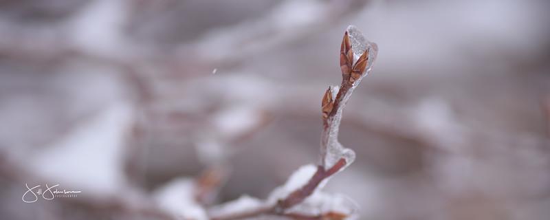 ice-0056.jpg