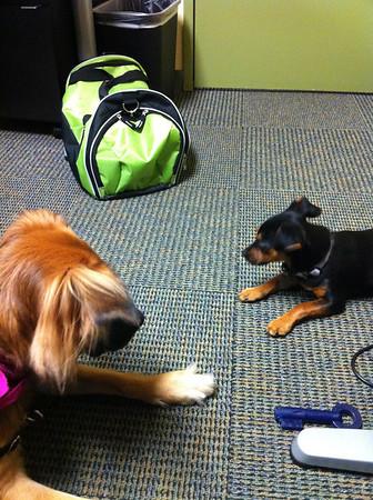 Rikku & Ziggy