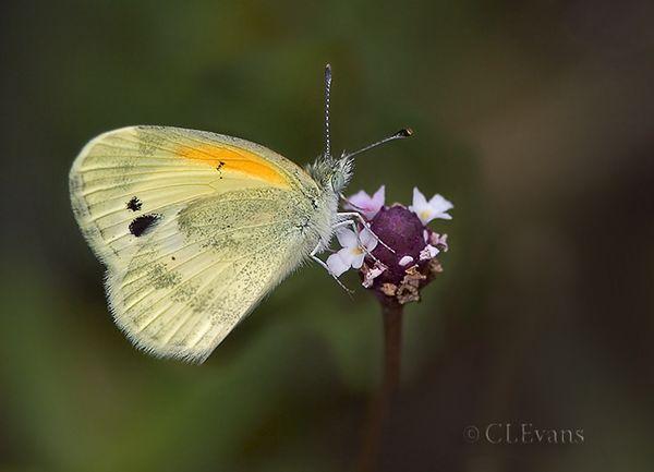 Butterflies/Moths