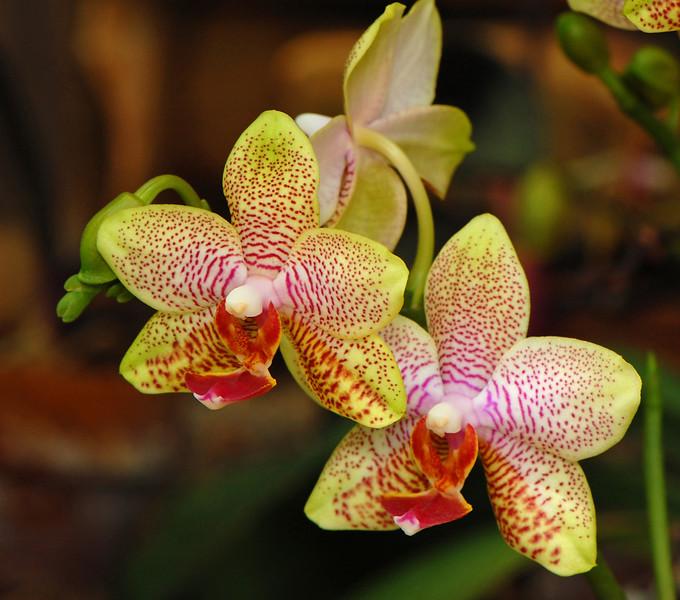 yelloworchids.jpg