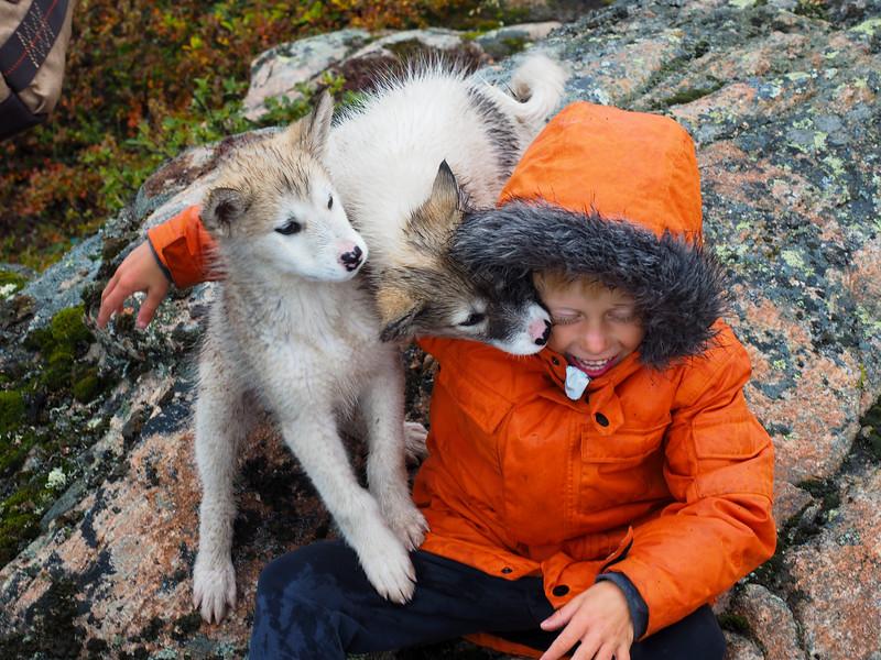 Puppy love in Ilulissat