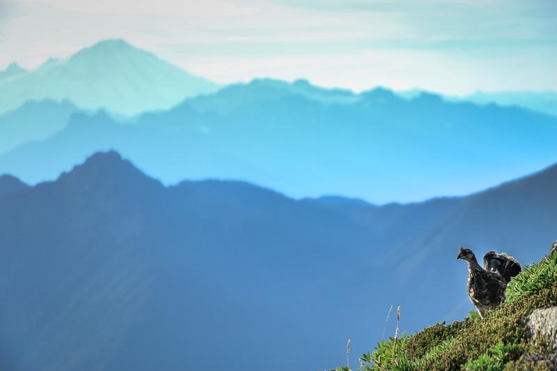 ptarmigan-mountains-baker-layers-ridges-blue-sky-pnw.jpg