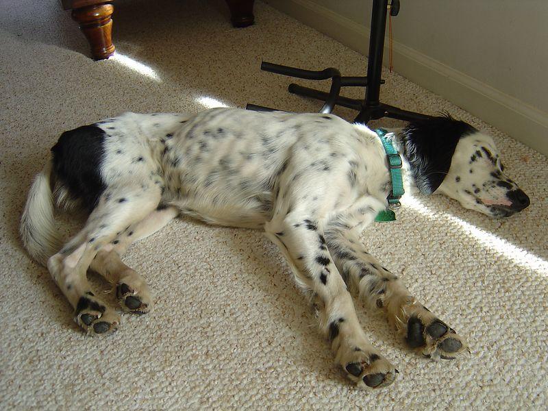 Gabby enjoying a nap.