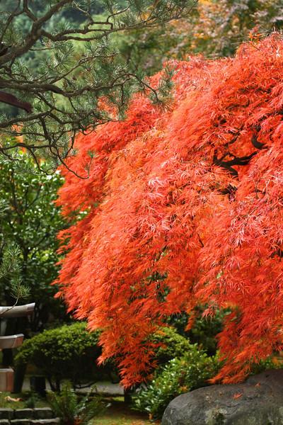 Portland Japanese Garden  11-11-11  3542.jpg