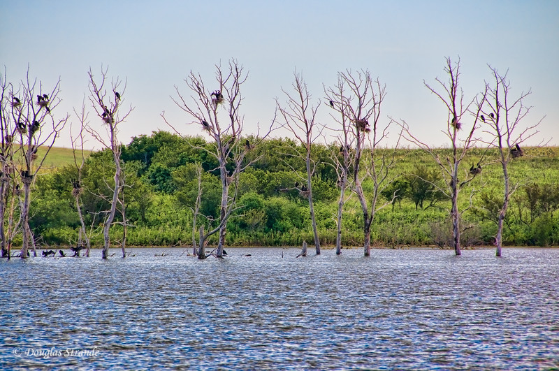 2011   Birds perched on dead, flooded trees