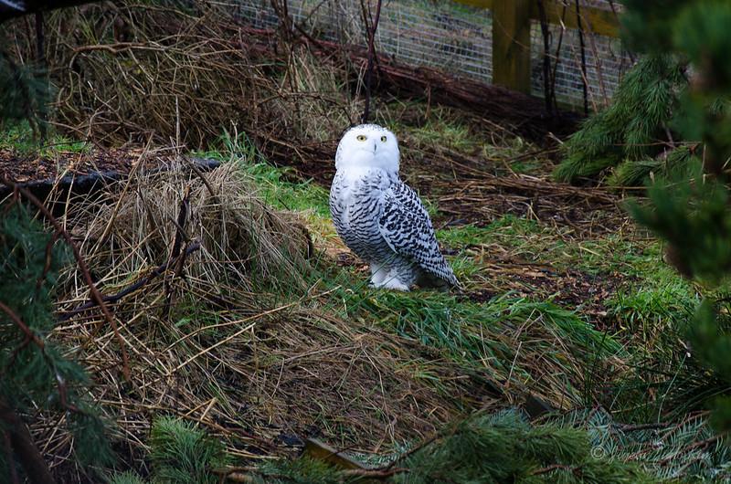 Scotland-Highland-9038.jpg