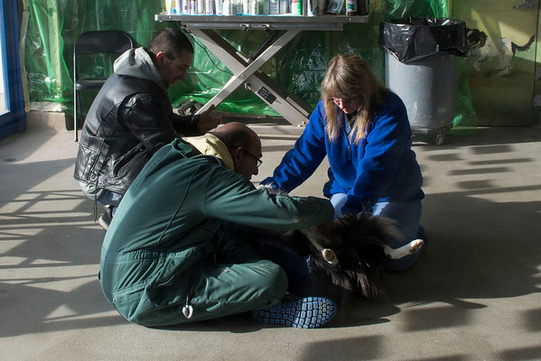 2012-1-03 All Creatures Veterinary Hospital