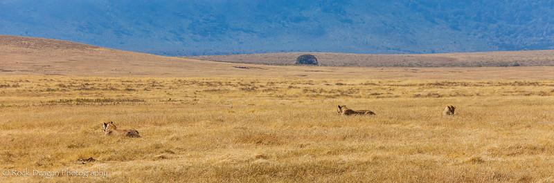 Ngorongoro-17.jpg