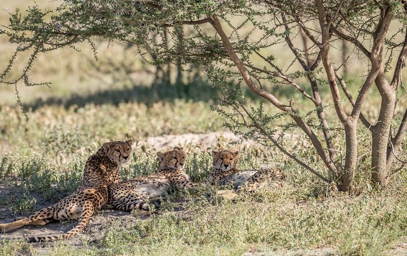 Tanzania_Feb_2018-61.jpg