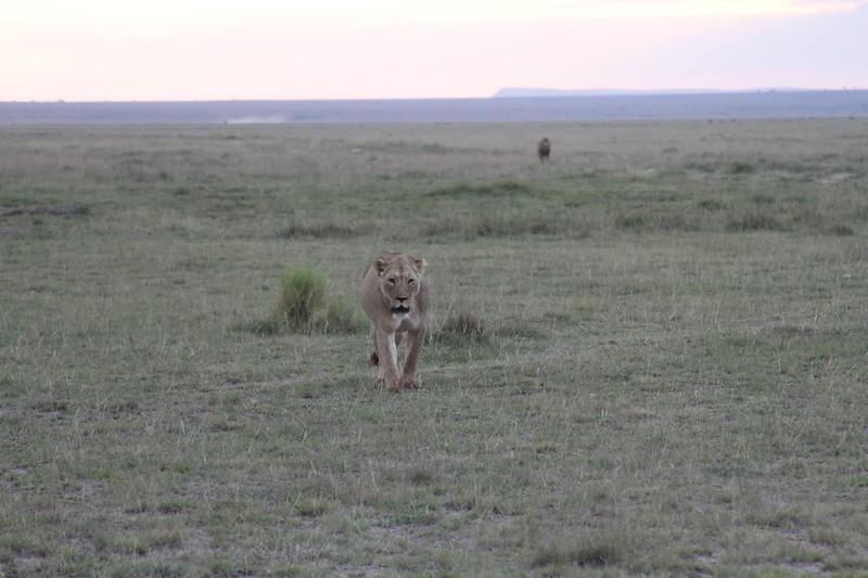 Kenya 2019 #2 1851.JPG