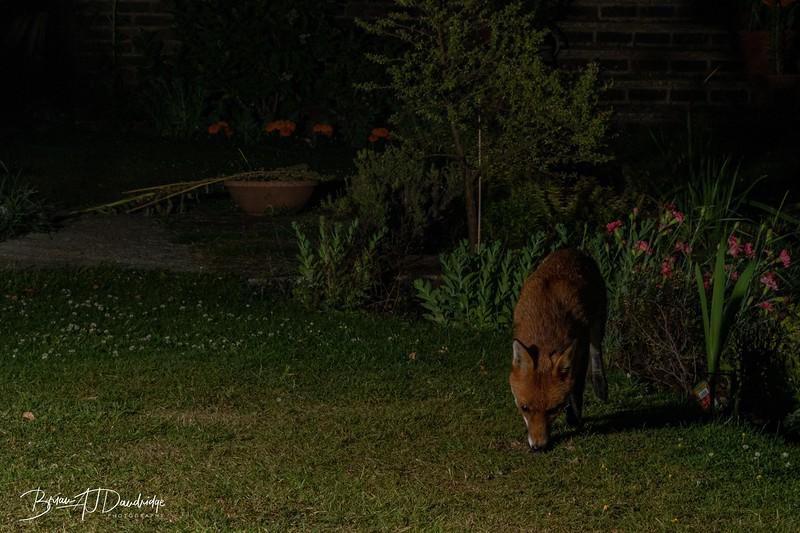 Garden Night Shoot-7334.jpg