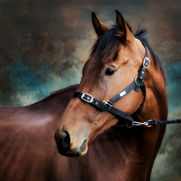 equine_photography_parris_photography.jpg