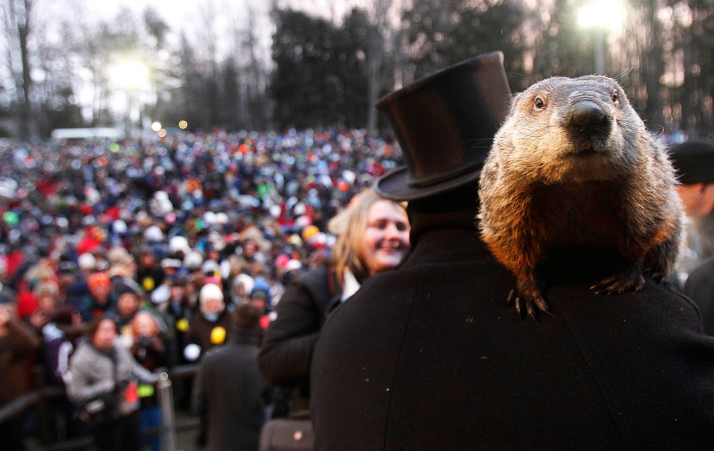 Description of . Groundhog co-handler Ron Ploucha holds Punxsutawney Phil in front of a record crowd estimated at 35,000 after Phil's annual weather prediction on Gobbler's Knob in Punxsutawney, Pennsylvania, on the 127th Groundhog Day, February 2, 2013. Phil did not see his shadow signaling an early end to winter. REUTERS/Jason Cohn
