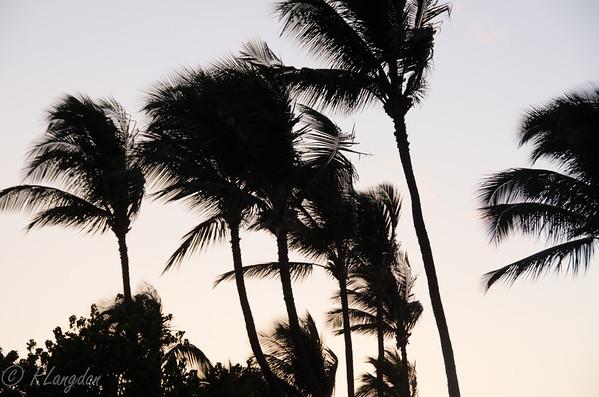 Hawaii day 3