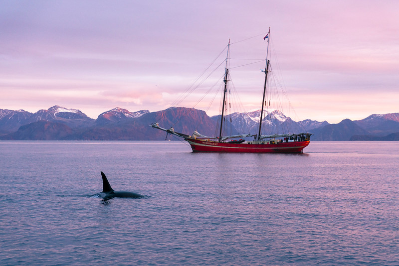 Orca Hunting Herring in Northern Norway 2018