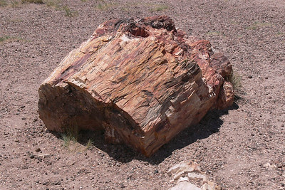 Petrified Forest 2009