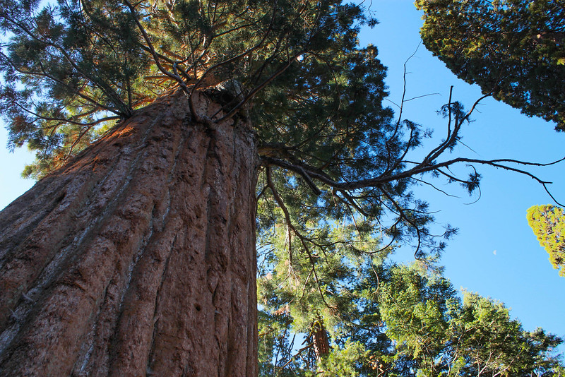 up at Sequoia*.jpg