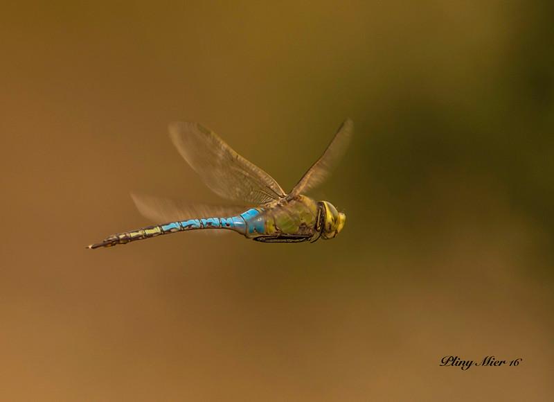Dragonfly LL_DWL0071.jpg