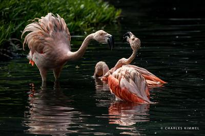 Flamingos: 2020