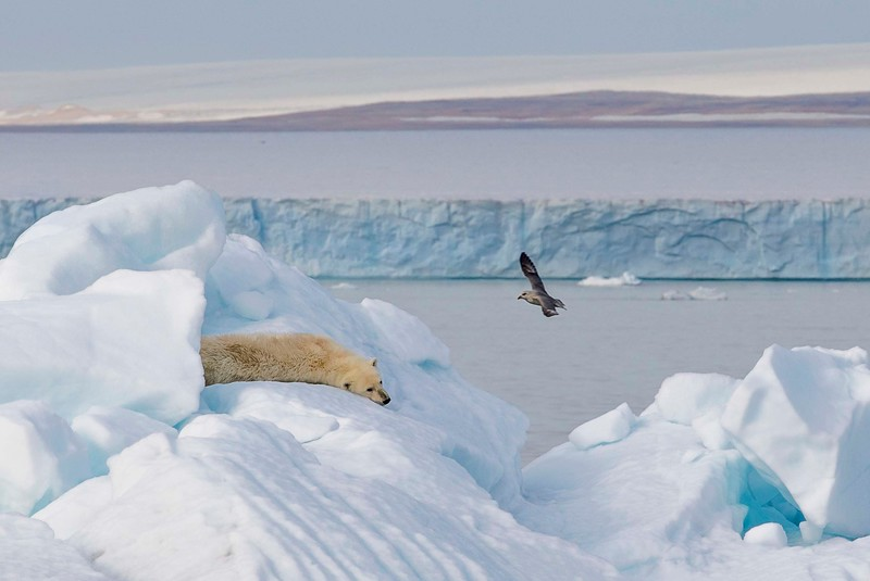 Svalbard-7341.jpg