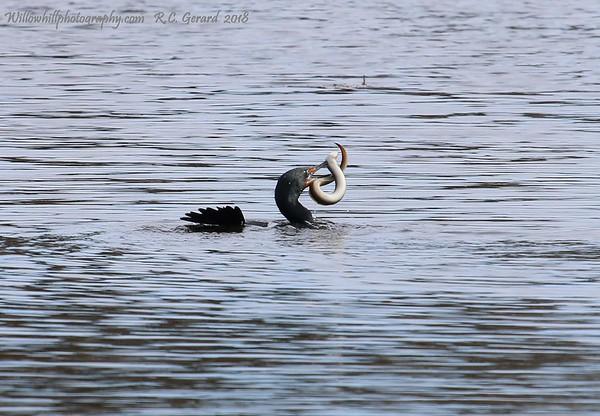 Birds of Hammonasset State Park