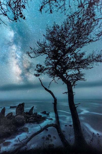 Dreaming Cypress, Sonoma Coast, California