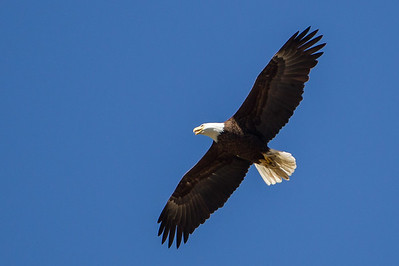 Fugle fra British Columbia og Alberta