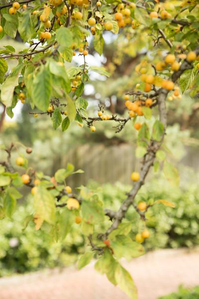 Chicago Botanic Garden 038.jpg