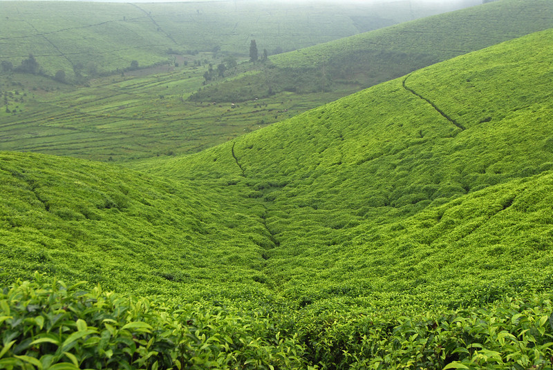 070113 3993 Burundi - Teza Mountains and Tea fields _E _L ~E ~L.JPG