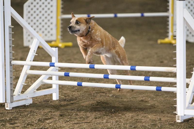 3-10-2019 Bloodhound-9117.jpg