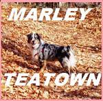 MARLEY (aussie girl) Trip to TEATOWN