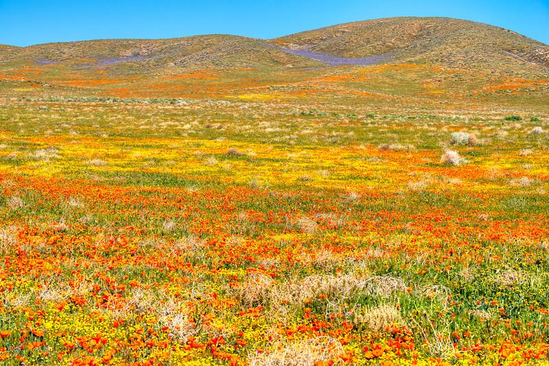 7895 Blooming Desert