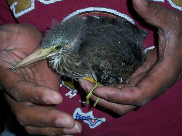 Different Baby Birds Rescued from Fallen Nest