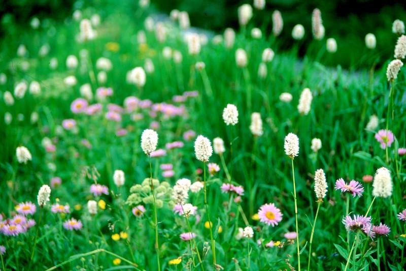 amh FLOWERS (1089).jpg